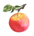 Watercolor apple with leaf vector image