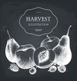 hand drawn fruits design vector image