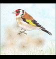 goldfinch on dry flowers vector image