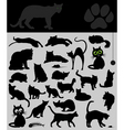 collection of cats vector image