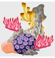 Element of the reef with different corals vector image