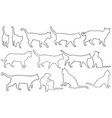 set of different cats vector image vector image