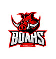 furious boar sport club logo concept vector image
