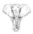sketch by pen african elephant front view vector image