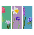 beautiful spring flower botanical bloom painting vector image