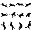 dogs vector image