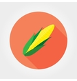 Corn Flat icon vector image