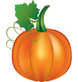 pumpkin with leaf on white background vector image