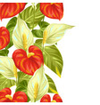 Seamless border with flowers spathiphyllum and vector image