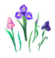ornate flowers for spring or summer design vector image