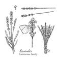 Ink lavender hand drawn sketch vector image
