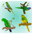 set of four colorful parrots vector image