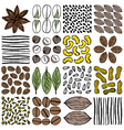 Set of nuts seeds and herbs as patterns vector