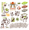Indian green and black tea logo collection vector image vector image