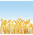 a field with realistic spikes vector image