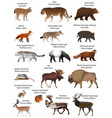 Animals of eurasia vector image