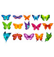bright colors butterflies vector image