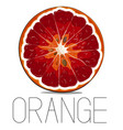 juicy vitamin fruit orange citrus vector image