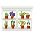 shelfs with collection of herbs in a flowerpots at vector image