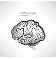 human brain sign isolated internal organ anatomy vector image