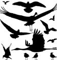 birds silhouettes vector image vector image