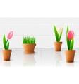 Beautiful tulip flowers vector image