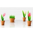 Beautiful tulip flowers vector image