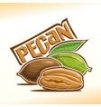 logo for pecan nut vector image