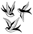 set of the swallow icons design elements for vector image