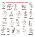 best herbal remedies for effective dandruff vector image
