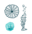 sea urchin drawing on white background hand drawn vector image