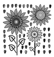 sunflowers and seeds vector image vector image