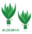 Aloe characters Cartoon Aloe Man isolated on vector image