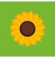 Sunflower icon - vector image