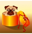 dog in the box vector image