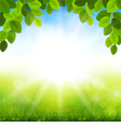 Summer background with green leaves vector image