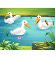 Three ducks swimming in the pond vector image vector image