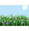 Scilla Flowers vector image