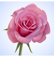 Pink rose covered drops of water vector image