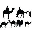 camels collection - vector image