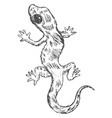 gecko top view vector image
