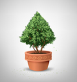 Pots pine tree vector image