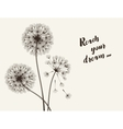 Blowball flower vector image vector image