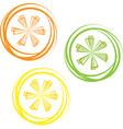 lime lemon isolated on white background vector image