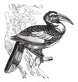 Hornbill bird vintage engraving vector image vector image