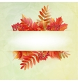Autumn abstract background with colorful leafs vector image vector image