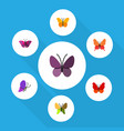flat moth set of violet wing summer insect vector image