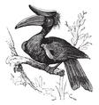 Rhinoceros Hornbill vintage vector image