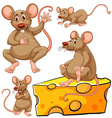Brown mouse and cheese slice vector image