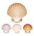 scallop seashell set exotic souvenir vector image